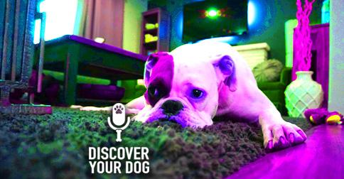Sad Dog on the Floor image