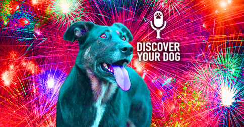 Dogs and Fireworks image