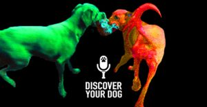 Ep 094 NOTHING is Fair in Tug-of-War with Your Dog
