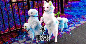 """Ep 098b So-Called """"Positive Punishment"""" for Your Dog"""