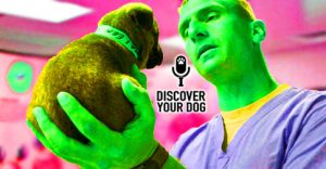 Ep 099 Curb Your Dog's Veterinary Violence