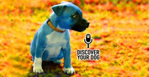 Ep 102 So You Purchased a Puppy…Now What?