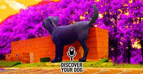 Dog Peeing on Things