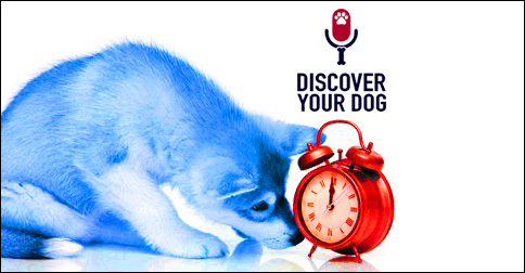 Dog with Clock Photo