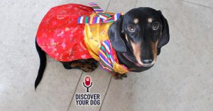 Ep 107 Halloween: Is It a Trick or a Treat for Your Dog?