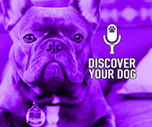 Ep 121 The Barking Dog, Part 1: Woof, Yap, Howl, or Bay