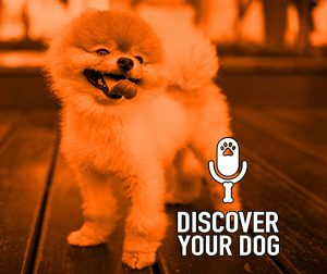 Ep 122 The Barking Dog, Part 2: The Three D's