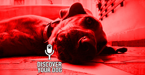 Discover Your Dog episode artwork