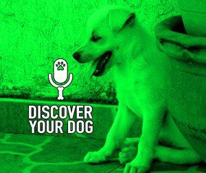 Ep 123b Bonus: The Barking Dog, Continued