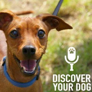 Ep 132 Leash Pulling Dog, Part 1: Yanking Your Arm Off