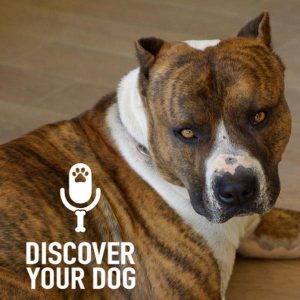 Ep 136 Seven Secrets to Building Your Dog's Self-Confidence: Part 1
