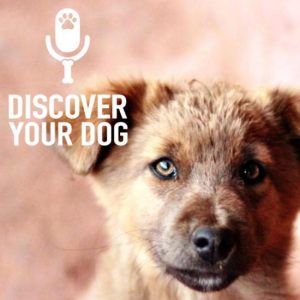 Ep 138 Tips to Find Your Perfect Dog Trainer