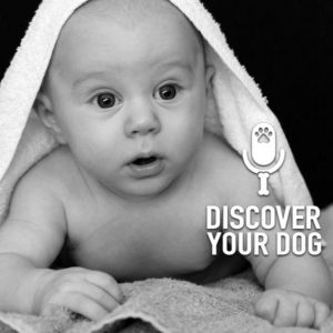 """Ep 146 When You're """"Expecting"""", What to Expect of Your Dog"""