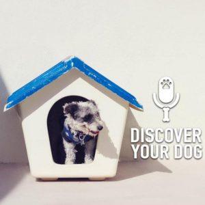 Ep 147 Dog House vs Dog Home