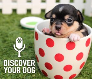 Ep 151 Bennie's Guide to Naming Your Dog - FamilyDogFusion