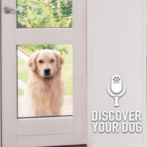 Ep 158 Ins and Outs of the Doggie Door