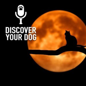 Ep 160 Beware… Don't Let That Cat Cross Your Path!