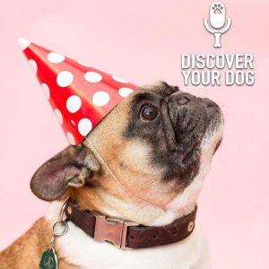 Ep 161 Three Years of Discover Your Dog