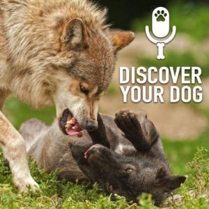 Ep 162 Dog Fights: What To Do
