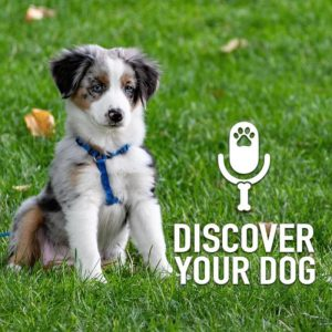Ep 180 Dog Training Highs and Lows