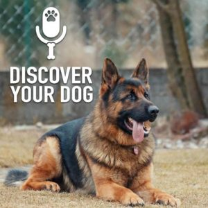 Ep 184 The 97% of Aggressive Dogs