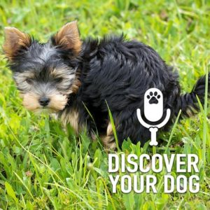 Ep 188 Five Steps to Potty Training Your Dog