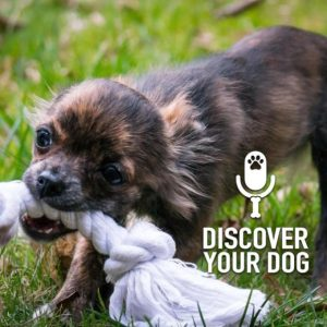 Ep 193 Five Ways to Stop Your Dog from Play-Biting