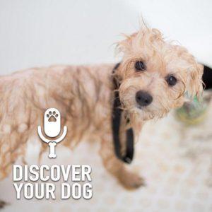 Ep 210 Dog Grooming Extraordinaires: Emily & Krishana