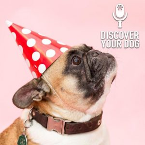 Ep 221 New Beginnings with Your Dog