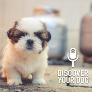 Ep 223 2019 Discover Your Dog in Review
