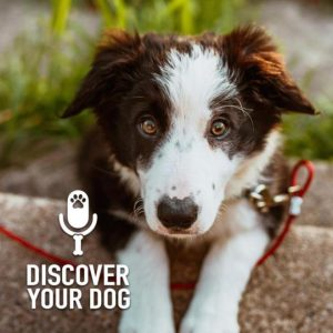 Good (Dog) Communication, Part 1