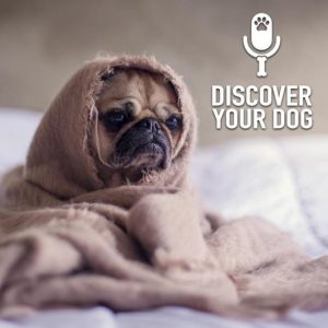 Is Your Dog Depressed?  Part 1
