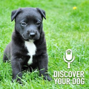 Another Puppy Podcast!