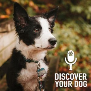 Is Your Dog Anxious?