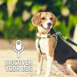 Is Your Dog Trainable?