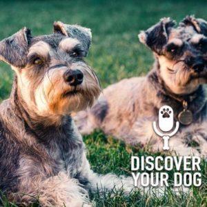 Dog Lover or Dog Liker?