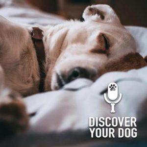 Dog Longevity Pt 2