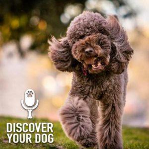 Dog Longevity Pt 3