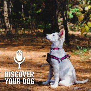 How Dog Training Works