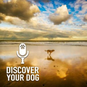 Memorialize Your Family Dog
