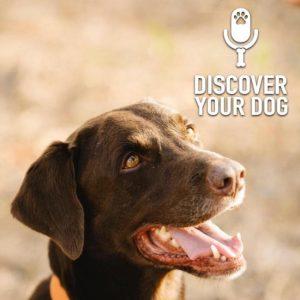 Specific Breed:  Labrador Retriever