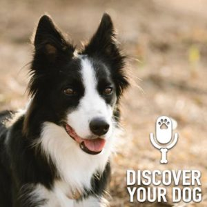 Specific Breed:  Border Collie