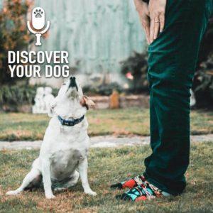 Retraining You to Retrain Your Dog