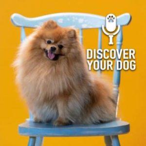 Specific Breed:  Pomeranian